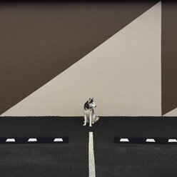 Dog sitting in parking lot with graphic shadow - CAVF34405
