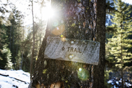 Close-up of trail sign on tree trunk in forest - CAVF34423