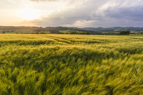 Austria, Upper Austria, Muehlviertel, grain field at evening twilight - AIF00471