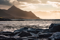 Norway, Lofoten Islands, Gravdal, coast and sea - WVF00939