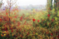 Spain, Wicker cultivation in Canamares in autumn, blurred - DSGF01703