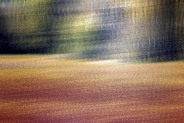 Spain, Wicker cultivation in Canamares in autumn, blurred - DSGF01712