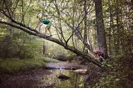 Boys climbing tree in forest - CAVF35069