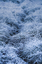 Norway, Lofoten Islands, frost-covered grass - WVF01052