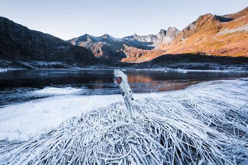 Norway, Lofoten Islands, frozen feather at water's edge - WVF01061