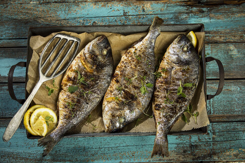 Grilled sea breams - MAEF12555