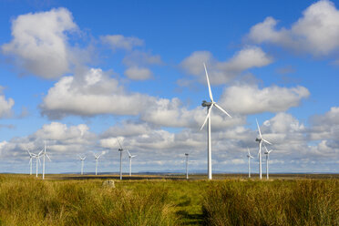 United Kingdom, Scotland, Highland, Lybster, wind park - LBF01911