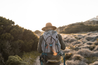 Italy, Sardinia, back view of hiker with hat and backpack - AFVF00400
