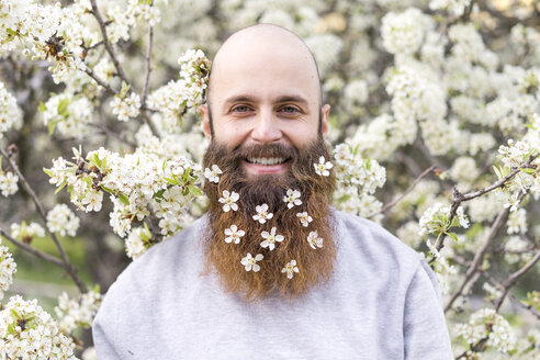 Portrait of laughing hipster with white tree blossoms in his beard - AFVF00418