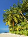 Maledives, Ross Atoll, beach - AMF05683