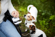 Cropped image of disabled woman in wheelchair with dogs outdoors - MASF01872