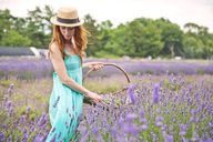 Woman picking flowers while standing in lavender field - CAVF35994