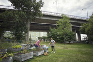 Mid adult man and woman working in vegetable garden with bridge in background - MASF02253