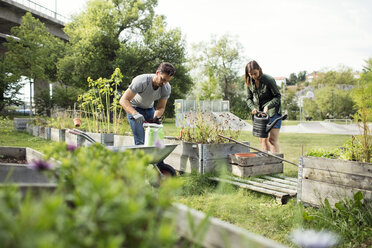 Mid adult couple working in vegetable garden - MASF02259
