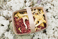 Directly above view of lingonberries and chanterelles in basket on rock - MASF02510