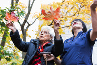 Senior woman and caretaker playing with maple leaves in park - MASF02888