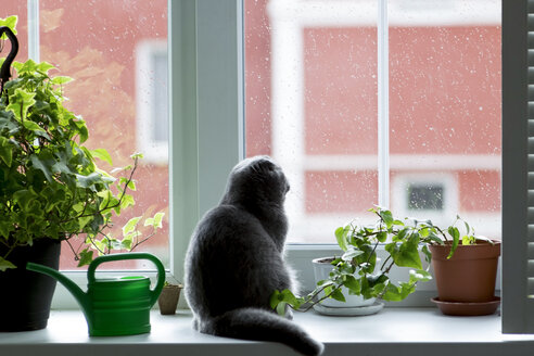 Cat looking through window while sitting by potted plants - CAVF36479