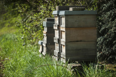 Germany, Beehives on harm - PAF01803