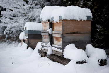 Germany, Snow-covered beehives on farm - PAF01809