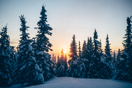 Scenic view of trees growing on snow capped mountain during sunset - CAVF36941
