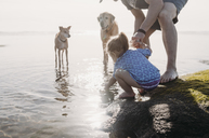 Father and daughter with dogs at rocky beach - CAVF37637