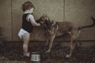 Boy with dog standing by wall in backyard - CAVF37712