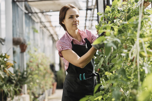 Woman checking plants in greenhouse - MASF03294