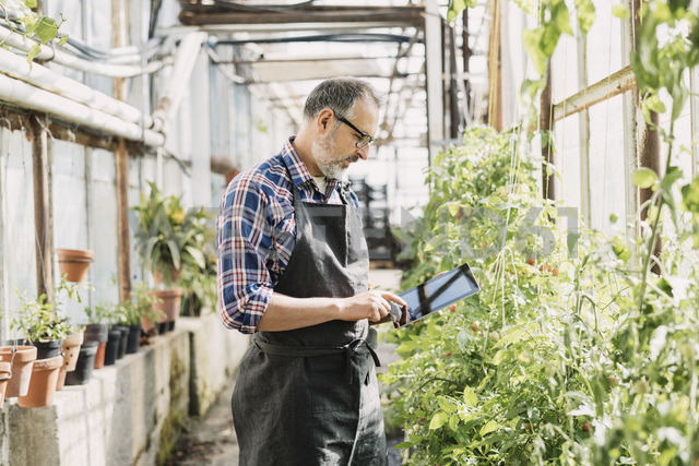 Male gardener using digital tablet in greenhouse - MASF03486