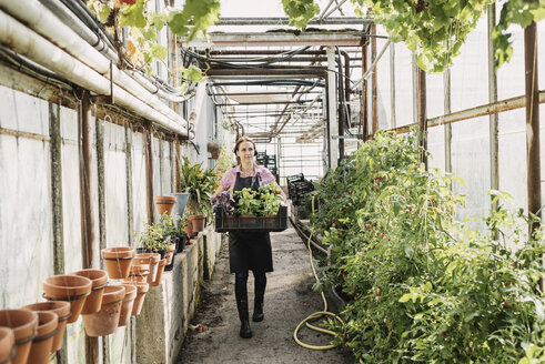 Gardner carrying plants in crate at greenhouse - MASF03642