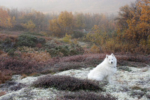 Dog sitting on grassy field during autumn - MASF03657