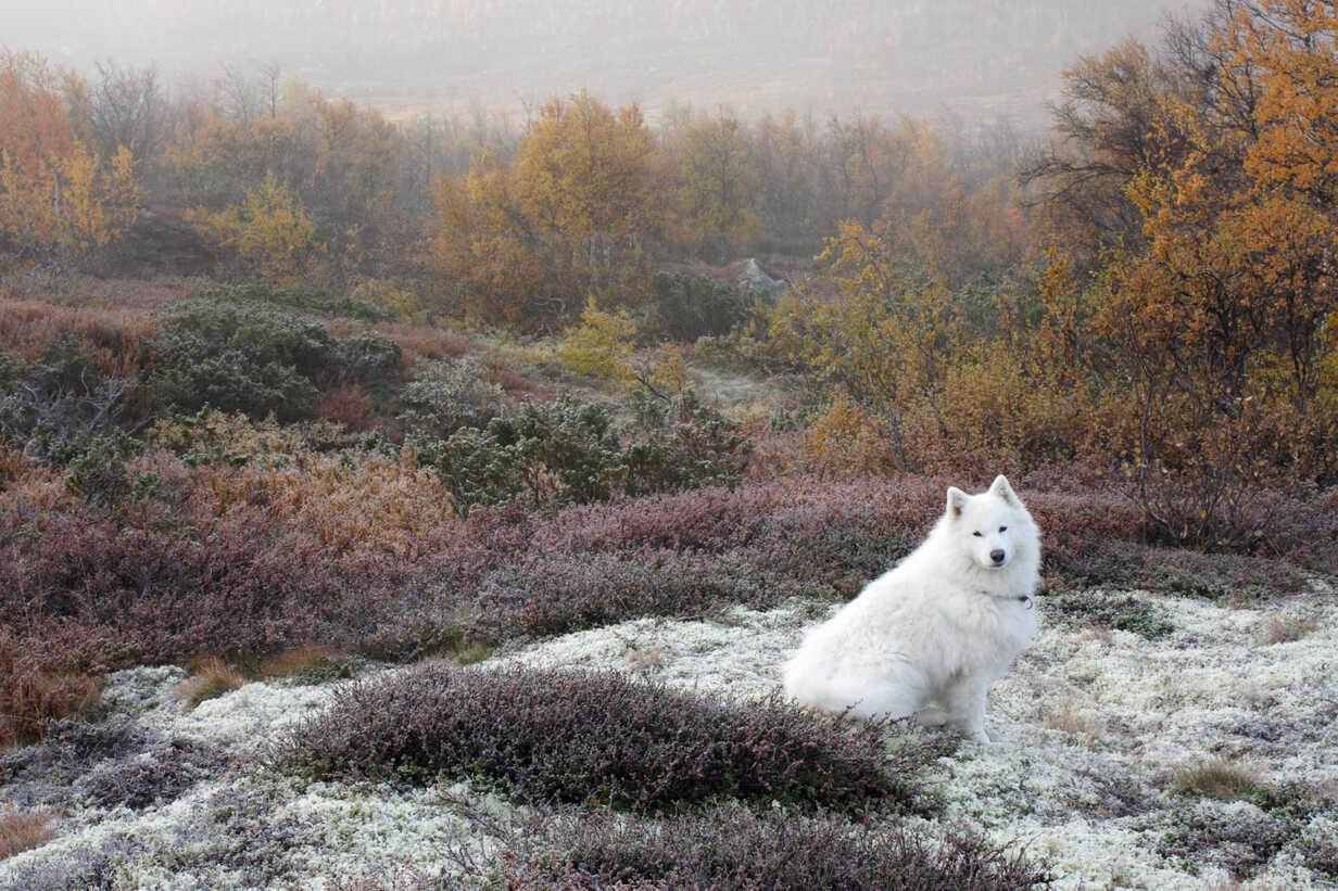 Dog sitting on grassy field during autumn - MASF03657 - Kentaroo Tryman/Westend61