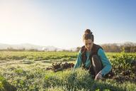 Woman gardening in field against clear sky - CAVF38022