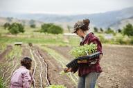 Female farmers working on field - CAVF38082
