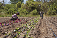 Female farmers working on field - CAVF38088