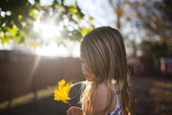 Girl looking at maple leaf in backyard on sunny day - CAVF38317