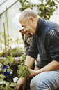 Side view of gay couple gardening in small greenhouse - MASF03895