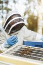 Beekeeper examining beehive on sunny day - MASF04452