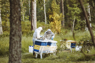 Beekeepers working on field - MASF04455