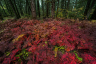 High angle view of plants against forest during autumn - CAVF38636