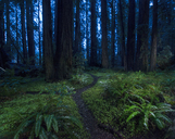 Tranquil view of forest at Jedediah Smith Redwoods State Park - CAVF38672
