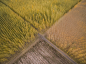 High angle view of tree farms - CAVF38732