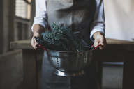 Midsection of woman holding kale in colander - CAVF38951