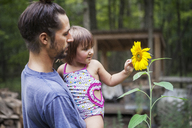 Father carrying daughter touching sunflower - CAVF39409
