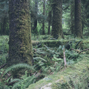 Trees growing in forest - CAVF40049