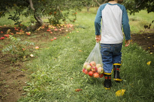Low section of boy carrying apples in plastic bag at orchard - CAVF40073