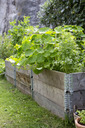 Plants growing in crates at vegetable garden - MASF04846