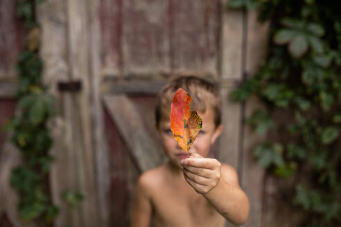 Close-up of shirtless boy holding autumn leaf against cottage - CAVF42438