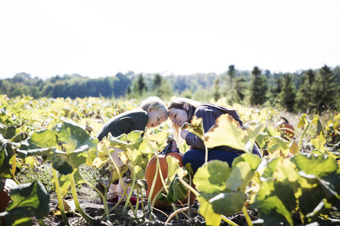 Boy and mother looking at pumpkin farm - CAVF42963