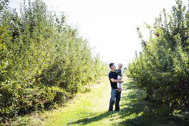 Father carrying son while standing on field in apple orchard - CAVF42972