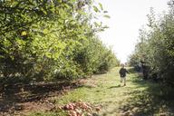 Boy running on field in orchard - CAVF42975